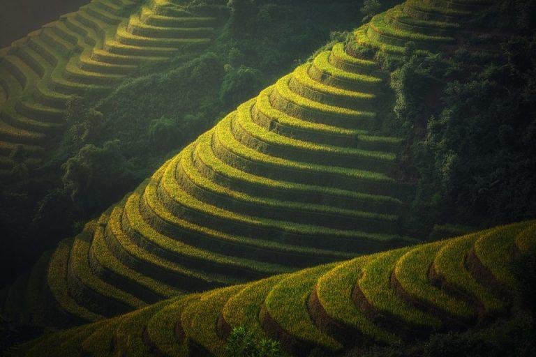 rizière de Thailande