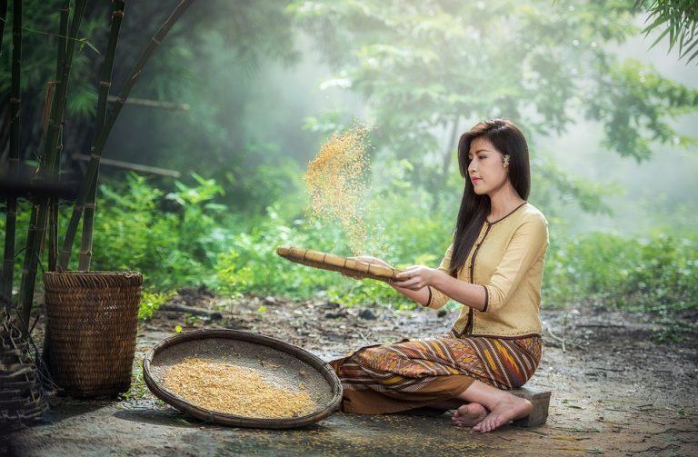 production de riz bio artisanal